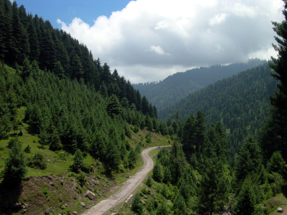 Forest of Aliabad