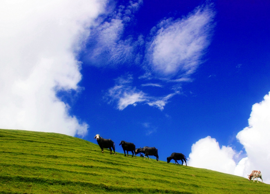 Neelfarry top near kalamula