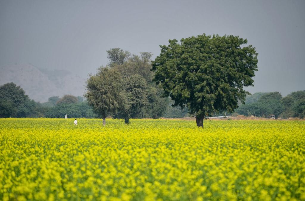 Rajputan village Distt Narowal